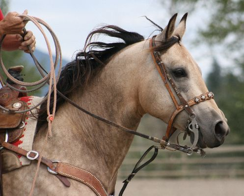 Riding horse, photo by Marcy McBride